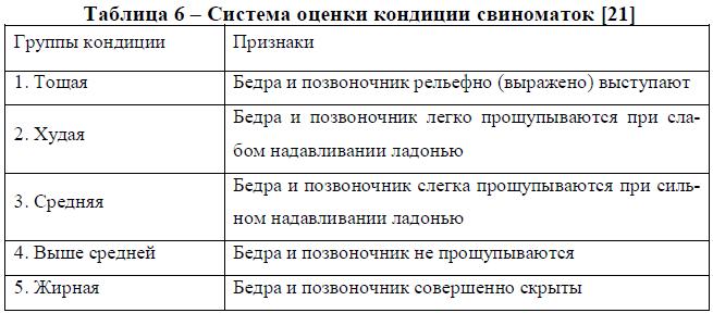 Система оценки кондиции свиноматок [21]